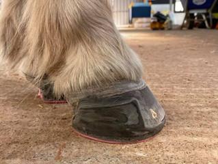 Farrier Case: Glushu Minis for laminitic pony.