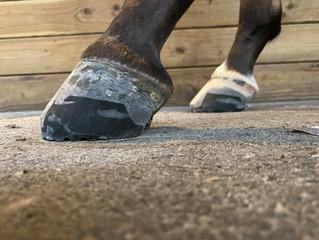 Farrier Report: Glushu for multiple hoof conditions.