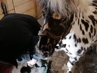 Mini Glushu for tiny hooves