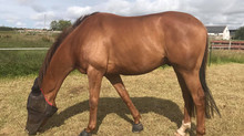 Update: Glushu for Tender Foot ex Racehorse.