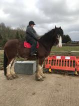 Horse Diaries: Koop is ready to ride!