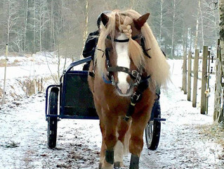 Glushu for a Shetland racer in Finland.