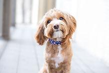 cute-dog-headshot.jpg