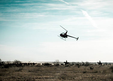 Cattle work and helicopter hog hunting