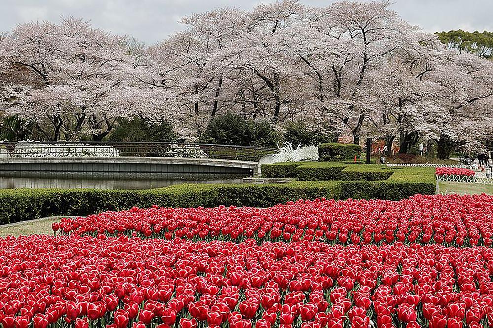 Kyoto Botanical Garden - Walking Tour Kyoto