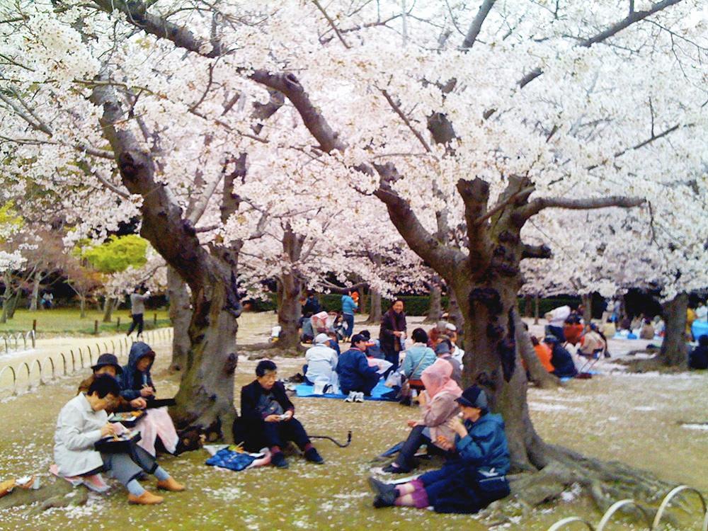 Japanese Bento - Walking Tours in Tokyo