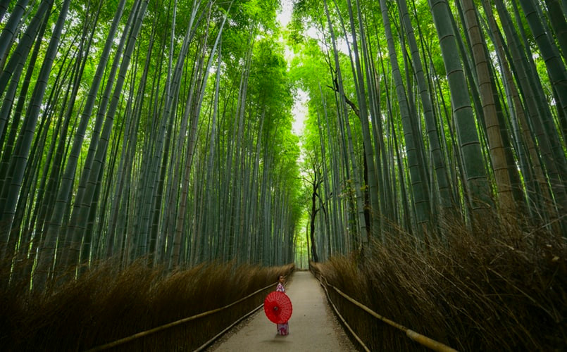 Best Places to Visit in Kyoto, Japan