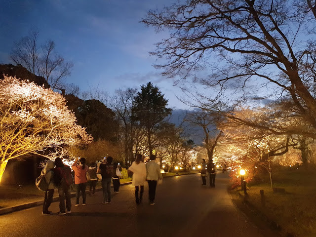 Kyoto Winter Illumination 2019 | Walking Tours Kyoto
