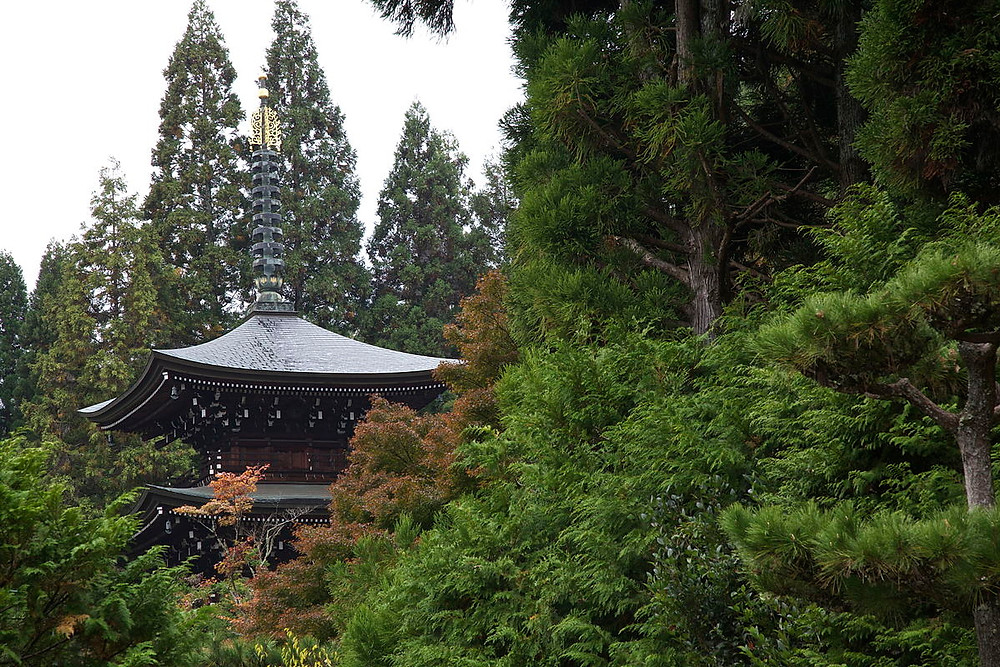 Top 5 Most Stunning Temples in Kyoto | Walking Tours Kyoto