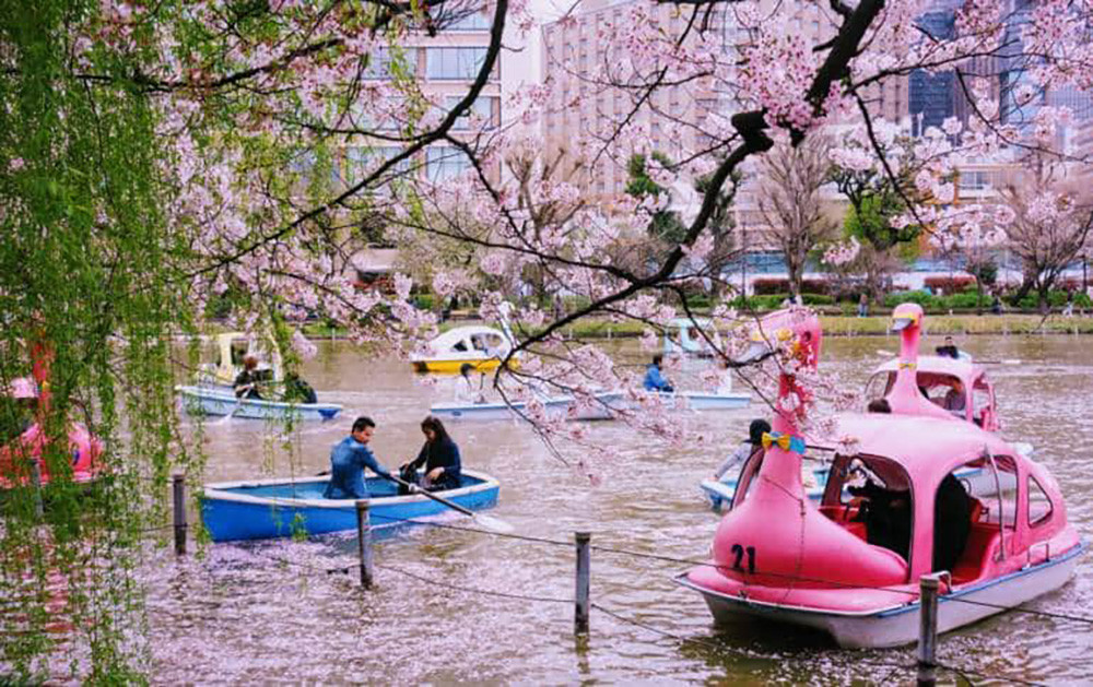 Day Tours in Tokyo, Night Tours in Tokyo, Group Tours in Tokyo, Private Walking Tours, University Walking Tours, Things To Do at Night in Tokyo, Activities in Tokyo, Tokyo Sightseeing Tour, Tokyo Tourist Attractions.