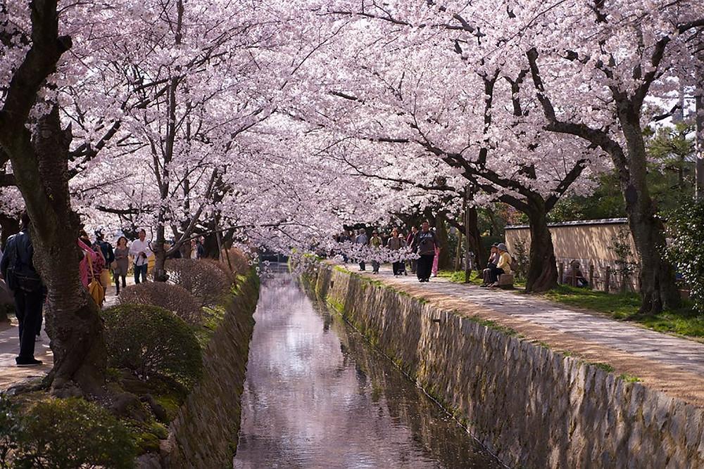 Philosopher's Path - Walking Tour Kyoto
