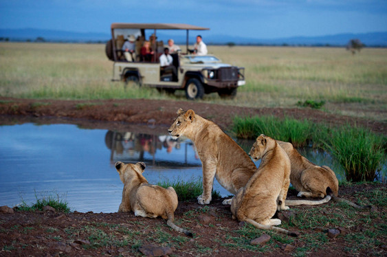 singita_serengeti_house_game_drive5.jpg