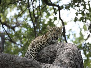 When Should I go to the Okavango Delta?