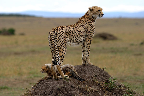 Conservaton Honeymoon Safari Kenya.jpg