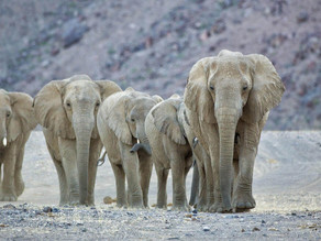 Best Time To See Wildlife In Namibia