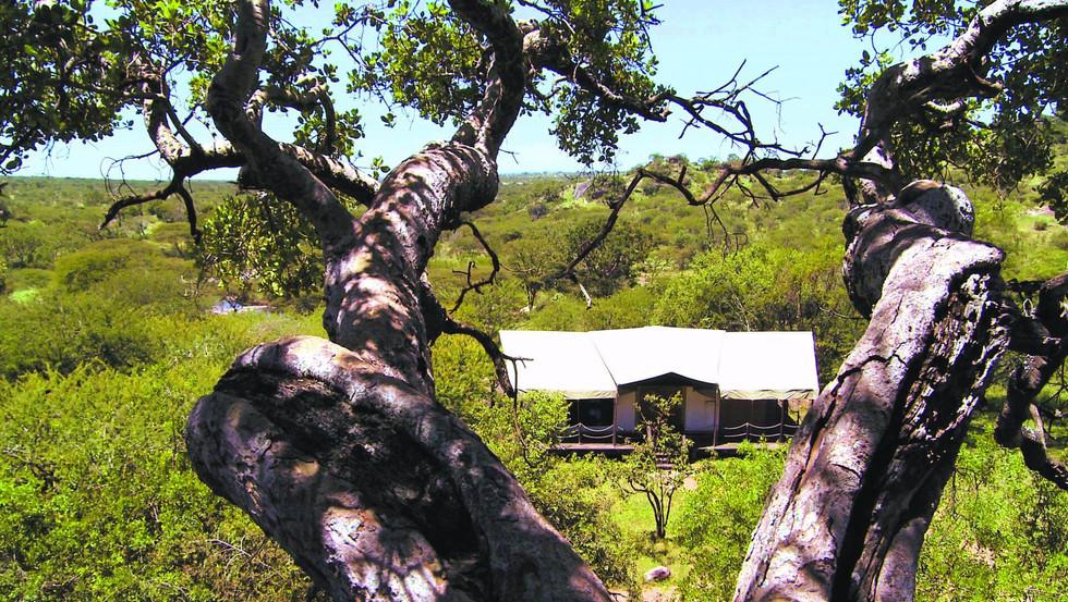 elewana-serengeti-migration-campjpg