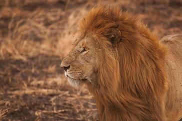 cheetah kenya
