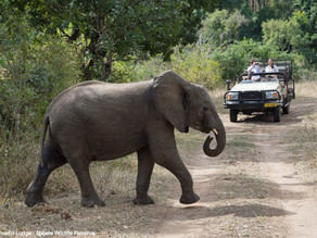 Best Time For Safaris In Malawi