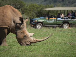 Best Time to go on safari in South Africa