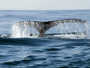 What are the Best Months for Whale Watching in South Africa?