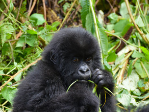 Rwanda: A Month by Month Guide