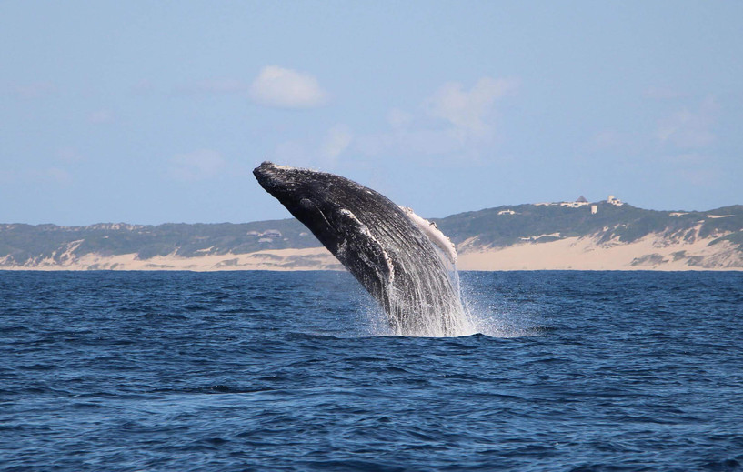 whale_jumping.jpg