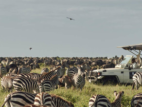 When and where to see the Great Migration