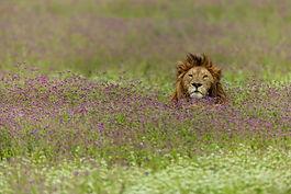 Tanzania Lux Safari .jpg