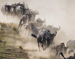 Great migration.jpg