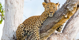 Best%20of%20Zambia%20Luxury%20Safari_edi