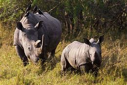 Zim Family Conservation Safari.jpg