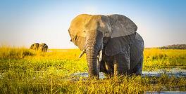Botswana Elephant Kingdom.jpg