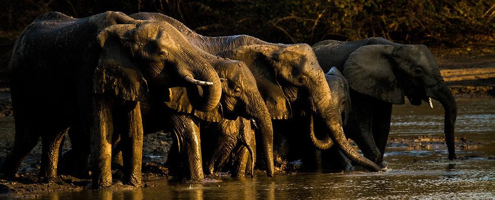 kanga-elephant_herd_drinking_from_kanga_