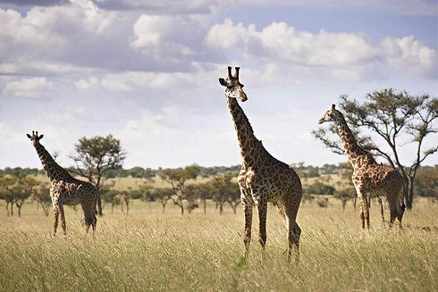 Singita Serengeti House_12.jpg