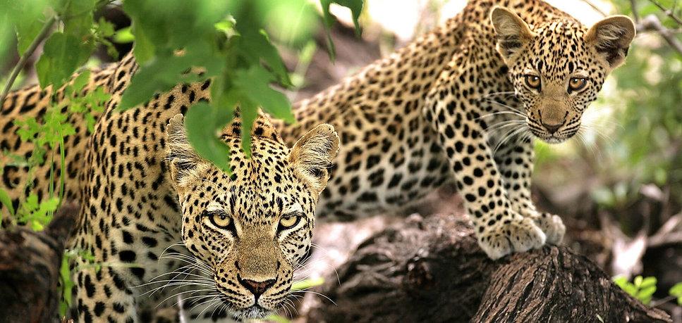 kruger-game-drive-wildlife-ngala_8_edite