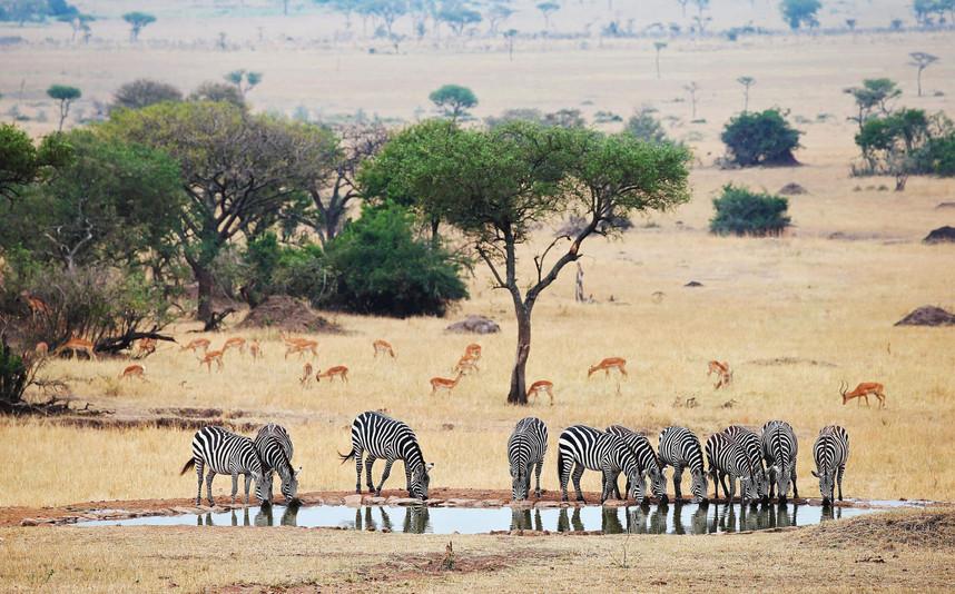 Singita Serengeti House_11.jpg