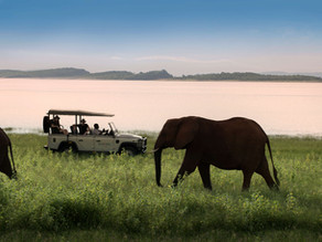 Best Time To Go On Safari In Zimbabwe
