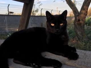 £490 for Zenka Cat Shelter - Serbia