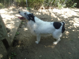 Monthly support for Bojana's dogs