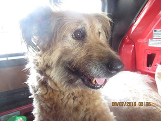 Food donation for Bojana's dogs