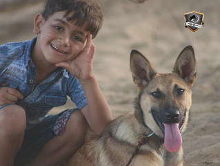 First animal shelter in Gaza