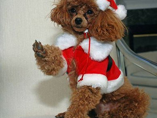 WORLD ANIMAL FRIENDS CHRISTMAS FAIR