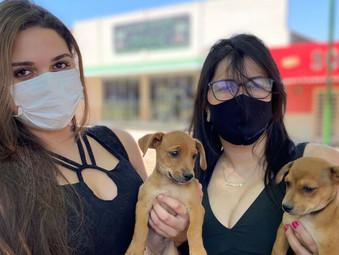 Jaraguá realiza 1ª Edição da Feira de Adoção de animais que estavam em abrigos