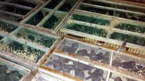 Polícia Ambiental prende duas pessoas e apreendem mais de 1 mil pássaros silvestres na GO-080