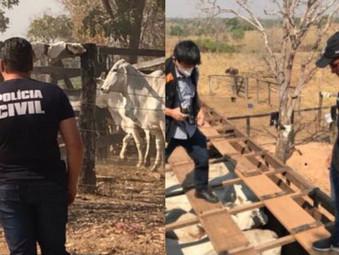 Em Mara Rosa dono de frigorífico é preso por receptação de gado furtado
