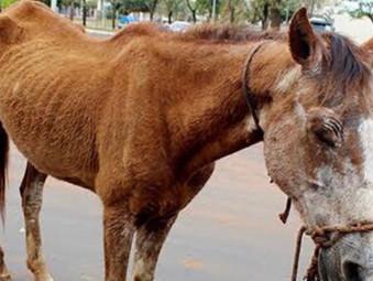 PM de Jaraguá é acionada após cavalo ser encontrado em condições de maus trato