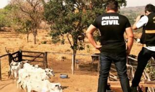 Polícia Civil de Ceres prende em Santa Terezinha homem por furto de 20 cabeças de gado