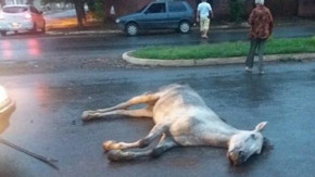 Brigas e morte de cavalo marcam primeiro final de semana Pré Cavalhadas