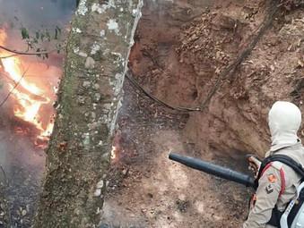 Bombeiros apagam fogo próximo ao Parque Ecológico da Serra de Jaraguá