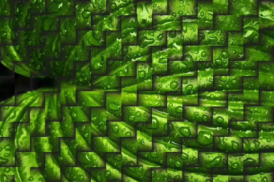 true nature-05.jpg